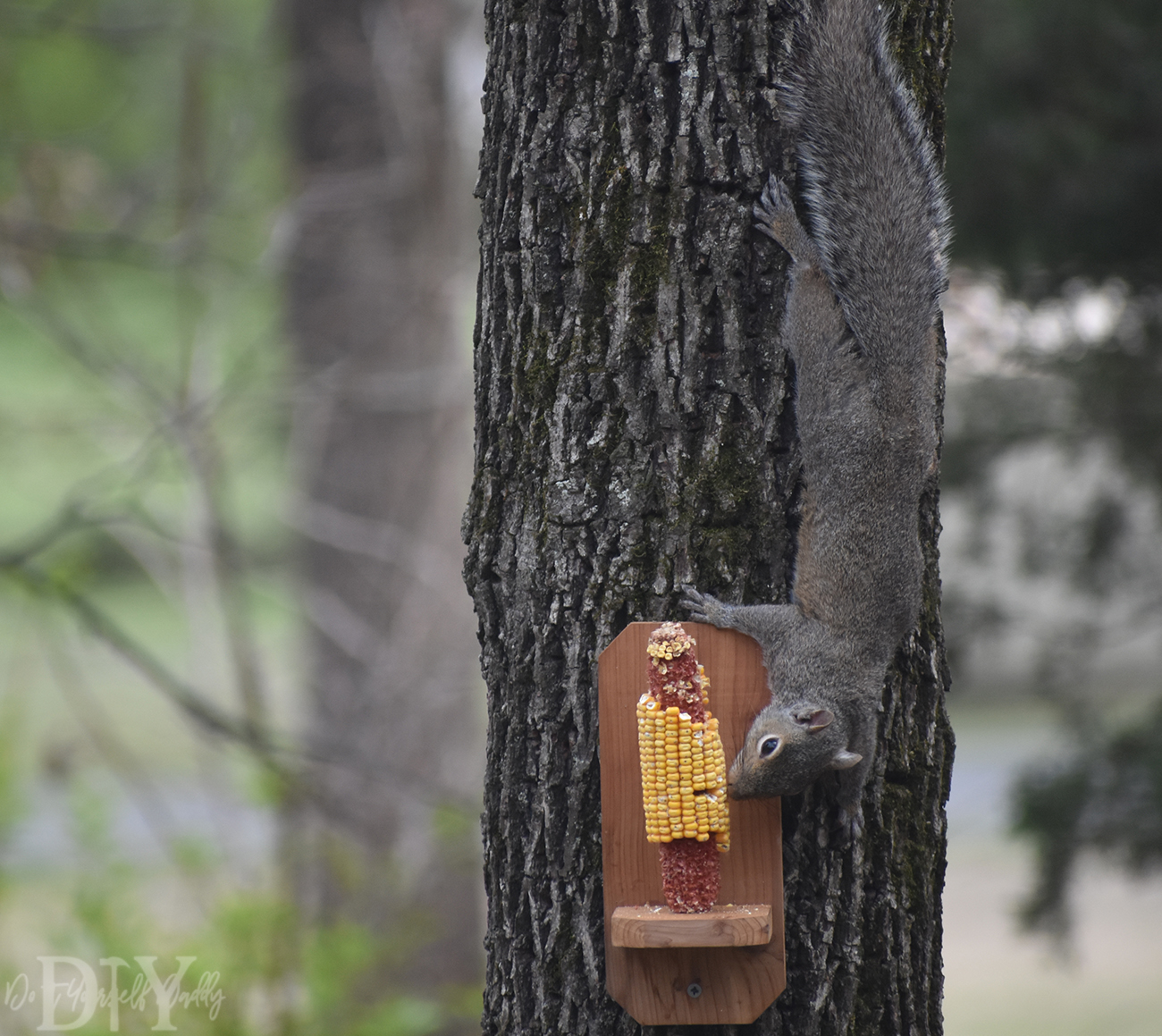 Diy Project Build Your Own Basic Squirrel Feeder Do It Yourself Daddy